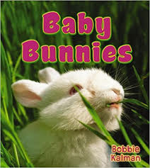 Baby Bunnies: It's Fun to Learn About Baby Animals